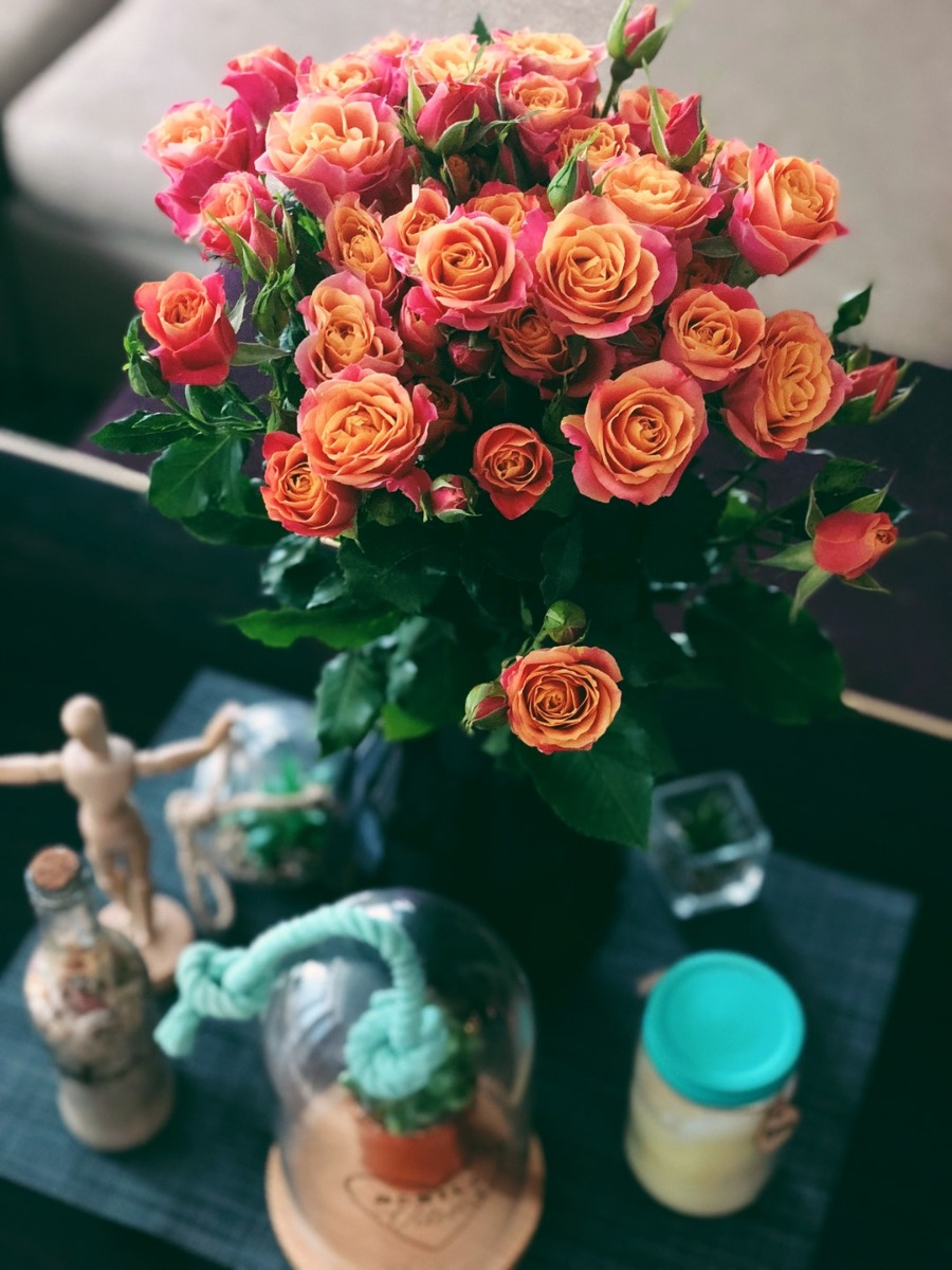 10 Facts About Roses You Never Knew