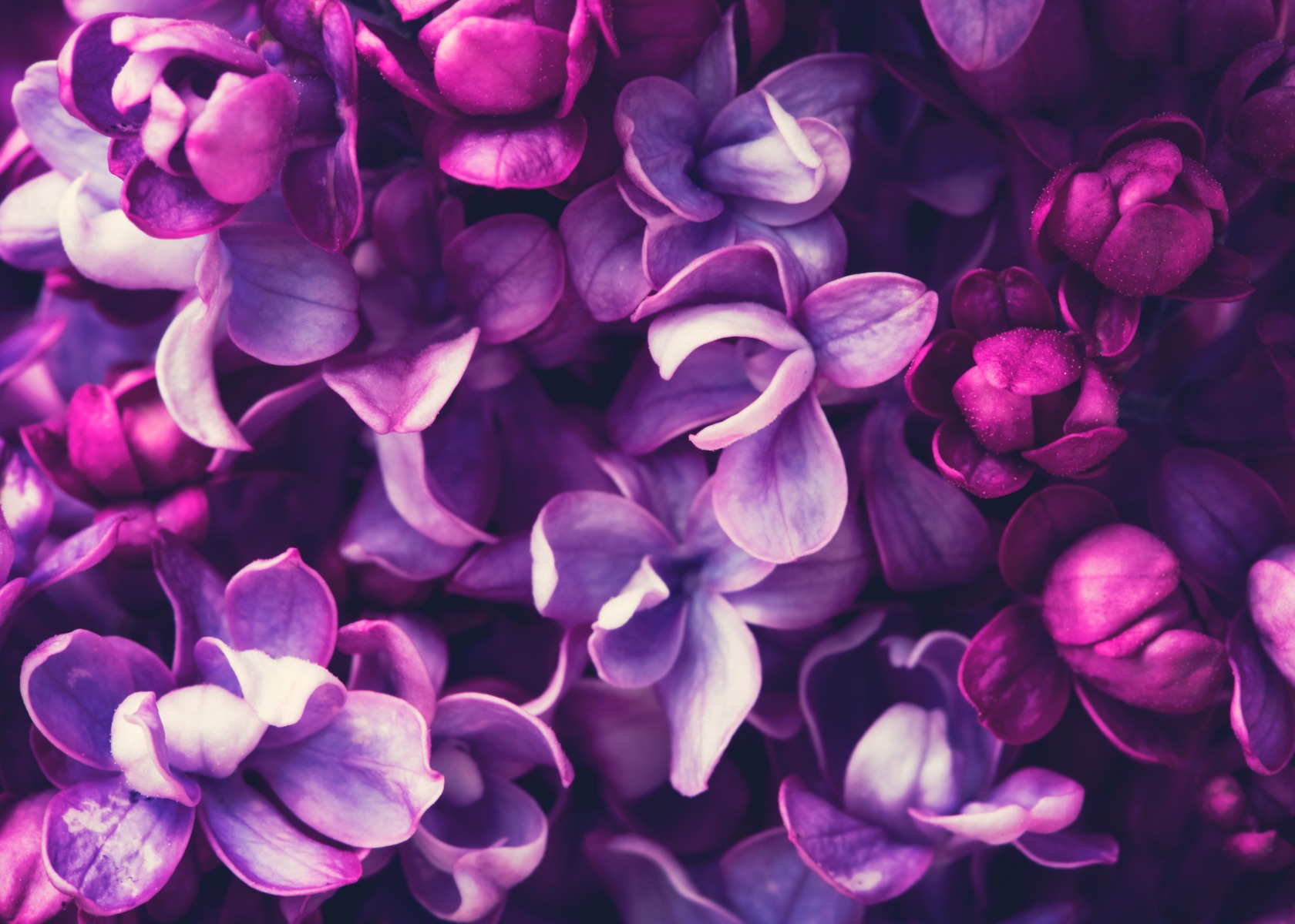 Beautiful Flowers and Their Unique Meanings